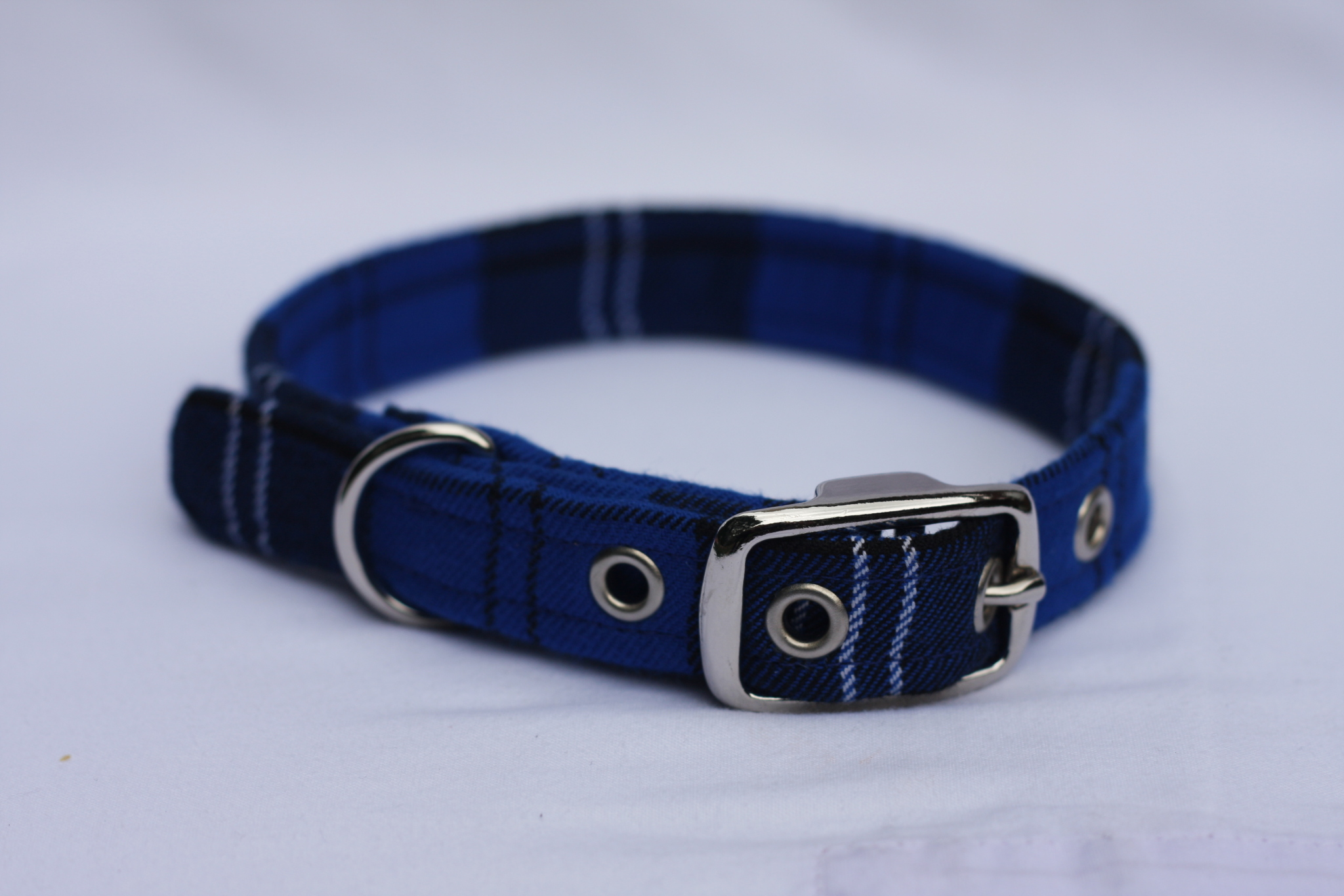 blue dog collar tartan