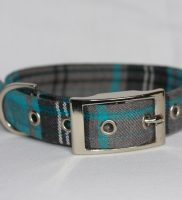 turquoise , grey dog collar in tartan